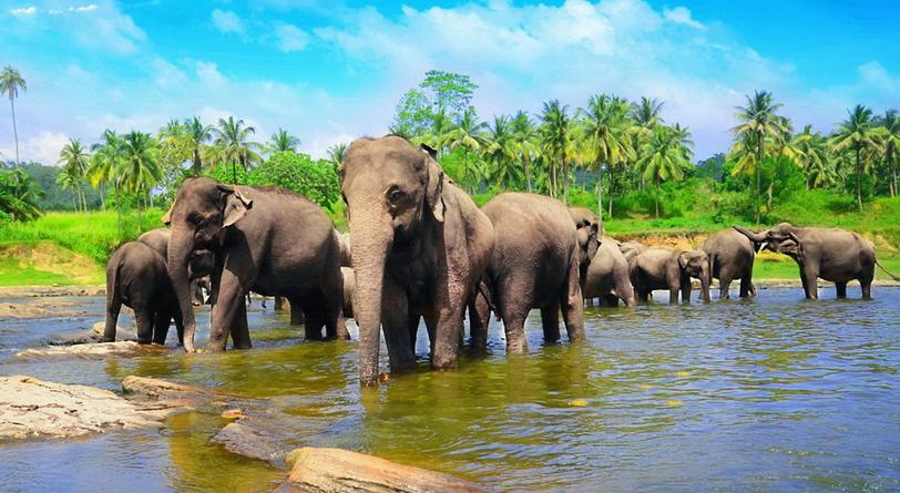 Sri-Lanka-3.JPG