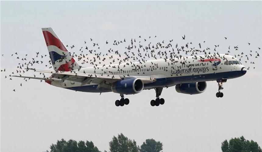 Пассажиры обвинили British Airways в унижении нищебродов