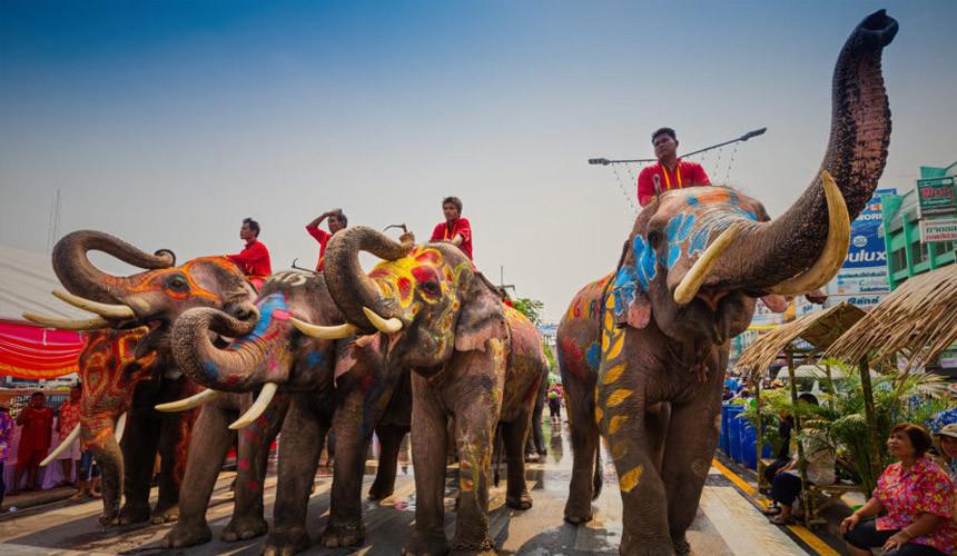 Туристы в Таиланде пострадали от нападения слонов