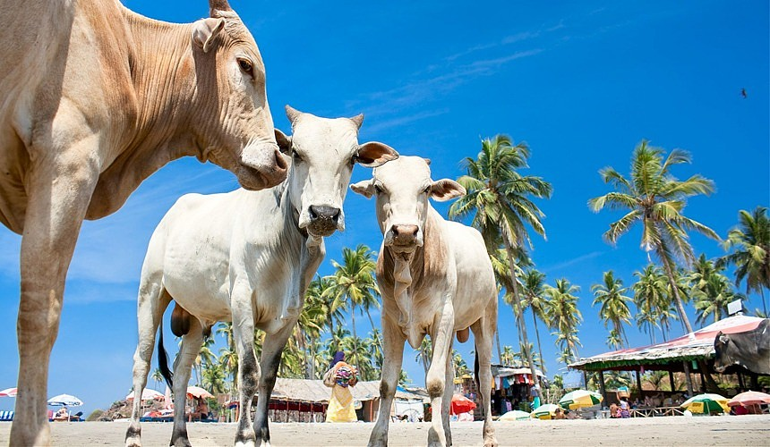 67% потенциальных туристов готовы полететь в Гоа уже в октябре