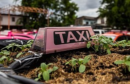 Брошенные в Бангкоке такси превратились в огороды